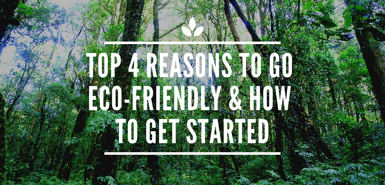 Top 4 Reasons to Go Eco-Friendly & How to Get Started